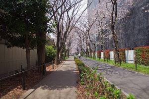 東京都 小金井公園 (2)