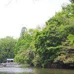 未就学児と一緒ならボートが無料!西武新宿線 東伏見駅徒歩5分 武蔵関公園にお出かけしてきました。GWでも混みすぎない、ゆったりした公園でした。