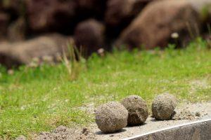 砂場 砂遊び (3) 泥団子