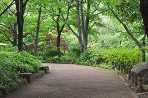 緑が多い 井草森公園