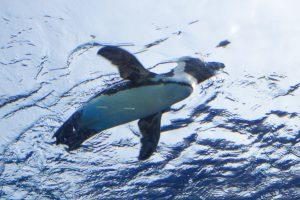 サンシャイン水族館 リニューアル 空飛ぶペンギン