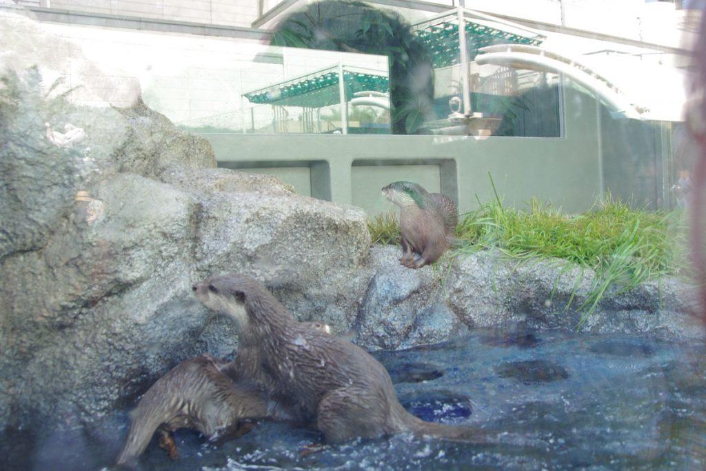 サンシャイン水族館 リニューアル カワウソ