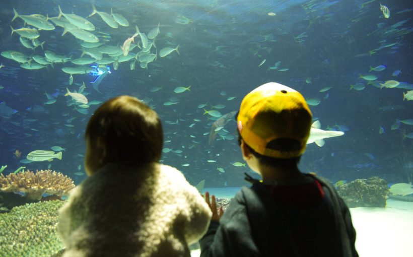 サンシャイン水族館の水槽を見る兄妹