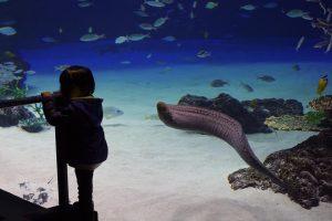 サンシャイン水族館 ラグーン