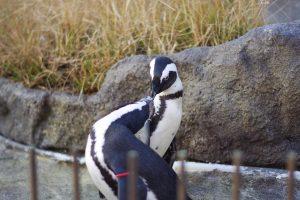 サンシャイン水族館 ペンギン カワウソ