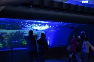 サンシャイン水族館 天空のオアシス ライトアップ ムーディ (1)