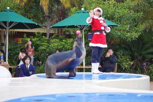 サンシャイン水族館 アシカショー クリスマス (2)