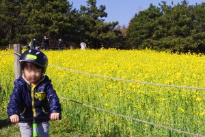 葛西臨海公園 菜の花