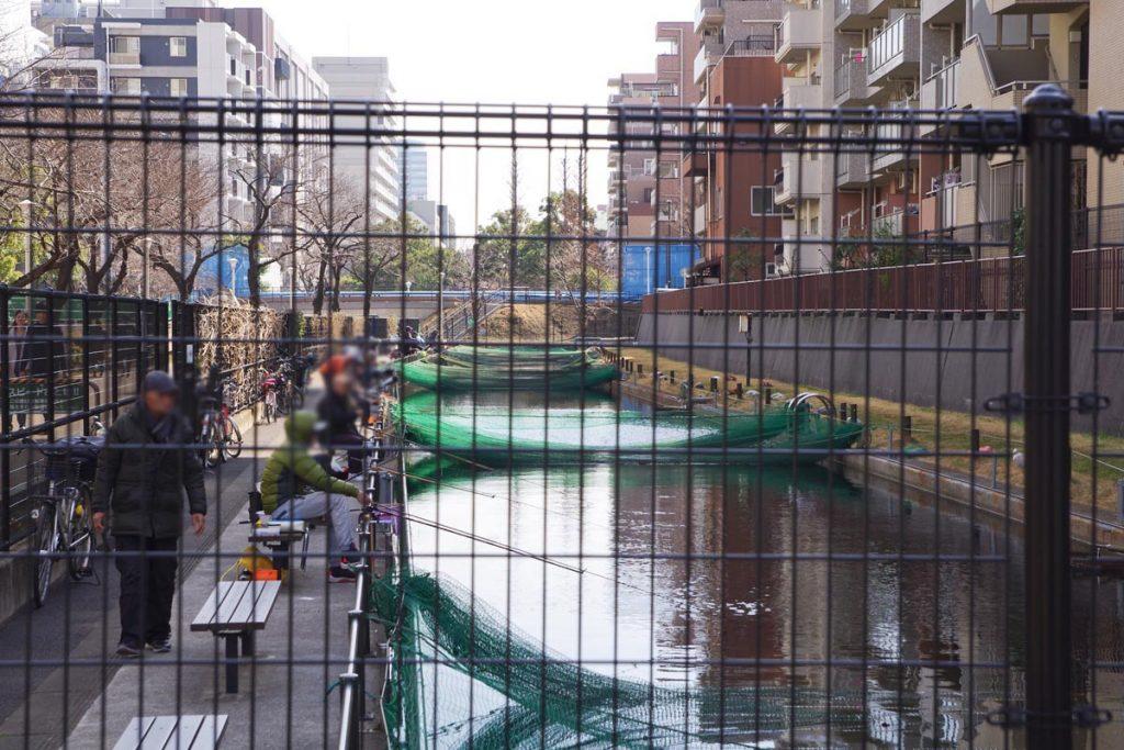 大横川親水公園 釣り