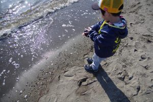 葛西臨海公園 砂浜