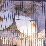 井の頭動物園 水生物館