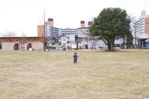 東伏見公園 芝生